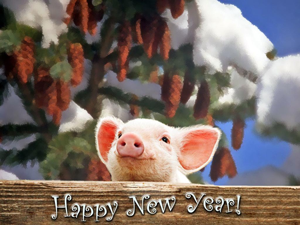 Плакаты на Новый Год 2019 год