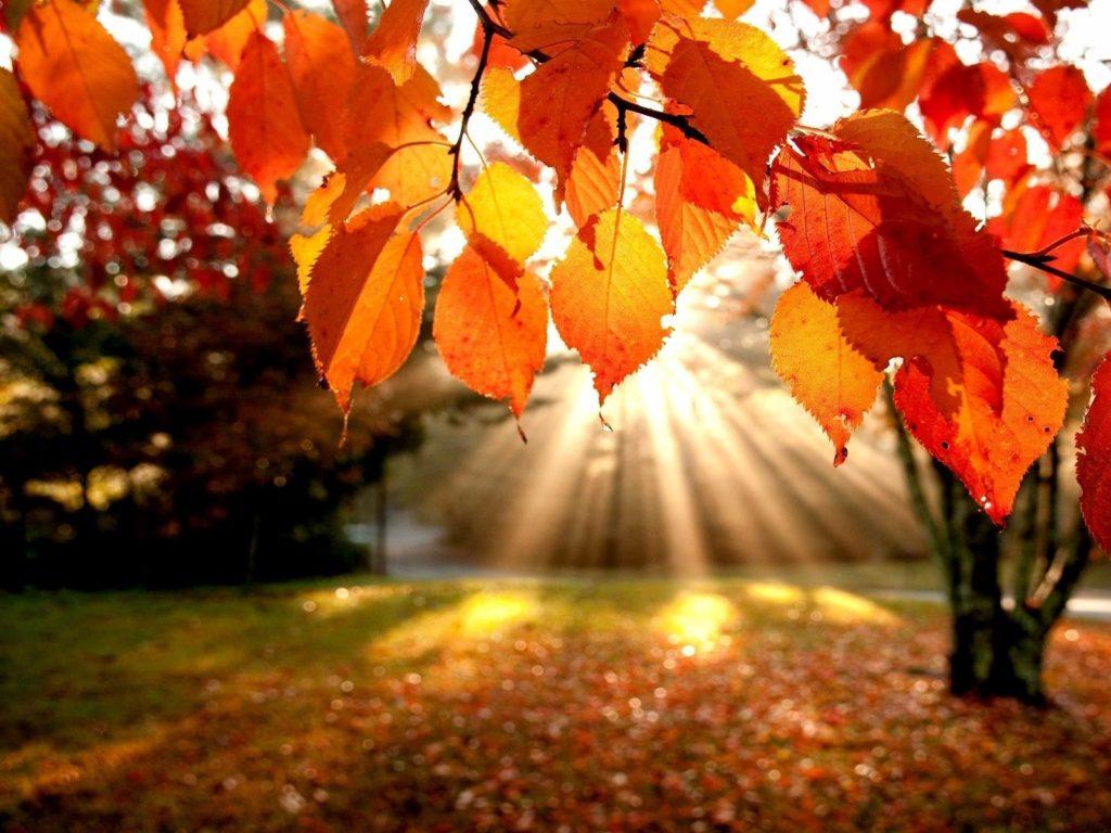 Выходные и праздничные дни в октябре 2019 года