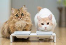 Рейтинг кормов для кошек 2019