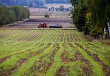 Синоптики посоветовали дачникам укрывать урожай от заморозков