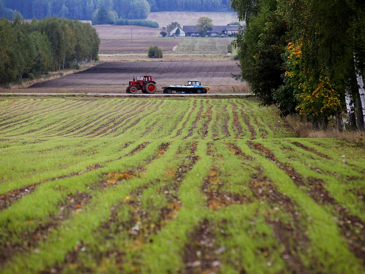 Синоптики посоветовали дачникам укрывать урожай от заморозков в 2019 году