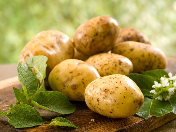 Эксперт: Какой покупать картофель - белый или красный