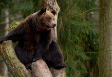 Россию назвали самой дикой страной в мире