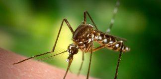 Ученые придумали новый метод борьбы с комарами